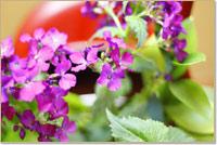時代屋の季節の花